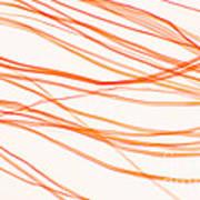 Nylon Fibers Art Print