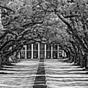 Oak Alley Monochrome Art Print