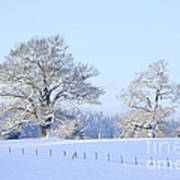Oak In Snow Art Print