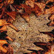 Oak Leaf 1 Art Print