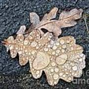 Oak Leaves Art Print