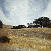 Oak Trees In A California Landscape Art Print