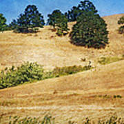 Oaks On Grassy Hill Art Print