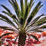 Oasis Palms Art Print