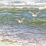 Ocean Seagulls Art Print by Cindy Wright