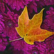 October Hues Art Print by Paul Wear
