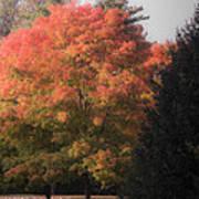 October Sunlight On Tree Tops Art Print