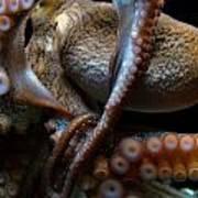 Octopus 1  Art Print