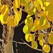 Oh Those Golden Leaves Art Print
