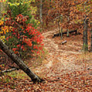 Old Country Road In Shannon County Art Print