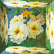 Old Fashioned Yellow Rose - Mirror Box Art Print