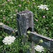 Old Fence And Wildflowers Art Print