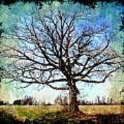 Old Oak Tree Art Print