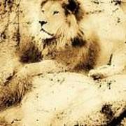 Old Photograph Of A Lion On A Rock Art Print