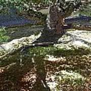 Old Tree II Art Print