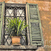 Old Window And A Green Plant Art Print