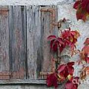 Old Window With Red Leaves Art Print