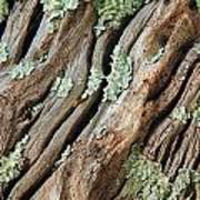 Old Wood And Lichen Art Print
