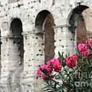Oleander And Colosseum Art Print