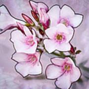 Oleander Blossoms Art Print