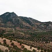 Olive Oil Mountain Art Print