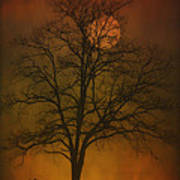 One Lonely Tree Art Print by Tom York Images