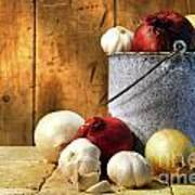 Onion Harvest Art Print by Sandra Cunningham