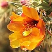 Orange And Yellow Cactus Flower Art Print