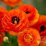 Orange Bulbs Art Print