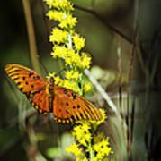 Orange Butterfly On Yellow Wildflower Art Print