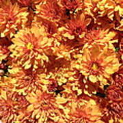 Orange Chrysanthemums Art Print