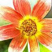 Orange Dahlia On Green Art Print