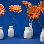 Orange Gerberas Against Blue Art Print