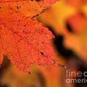 Orange Maple Leaf Art Print by Chris Hill