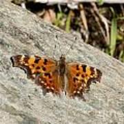 Orange Moth Art Print