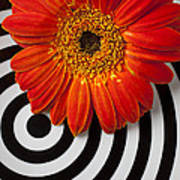 Orange Mum With Circles Art Print by Garry Gay