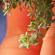 Orange Pots Of The Jardin Marjorelle Morocco Art Print