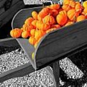 Orange Pumpkin Harvest Art Print
