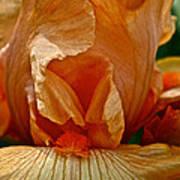 Orange Sherbert Art Print