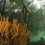 Orange Sponges Grow Art Print by Tim Laman