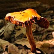 Orange Wild Mushroom Art Print