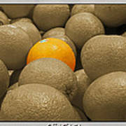 Oranges S.c.  Art Print