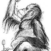 Orangutan, 19th Century Art Print by