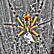 Orb Spider Art Print