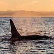Orca At Sunset Art Print