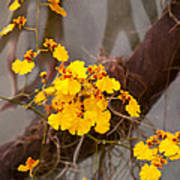 Orchid - Golden Morning  Art Print