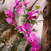 Orchid - Tropical Passion Art Print