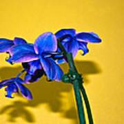Orchid #1 Art Print by David Alexander