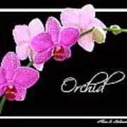 Orchid 2 2 Art Print