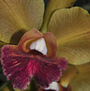Orchid 85 Art Print